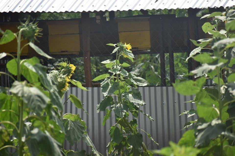 Nambale Magnet School Farm